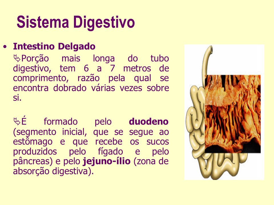 Sistema Digestivo Intestino Delgado