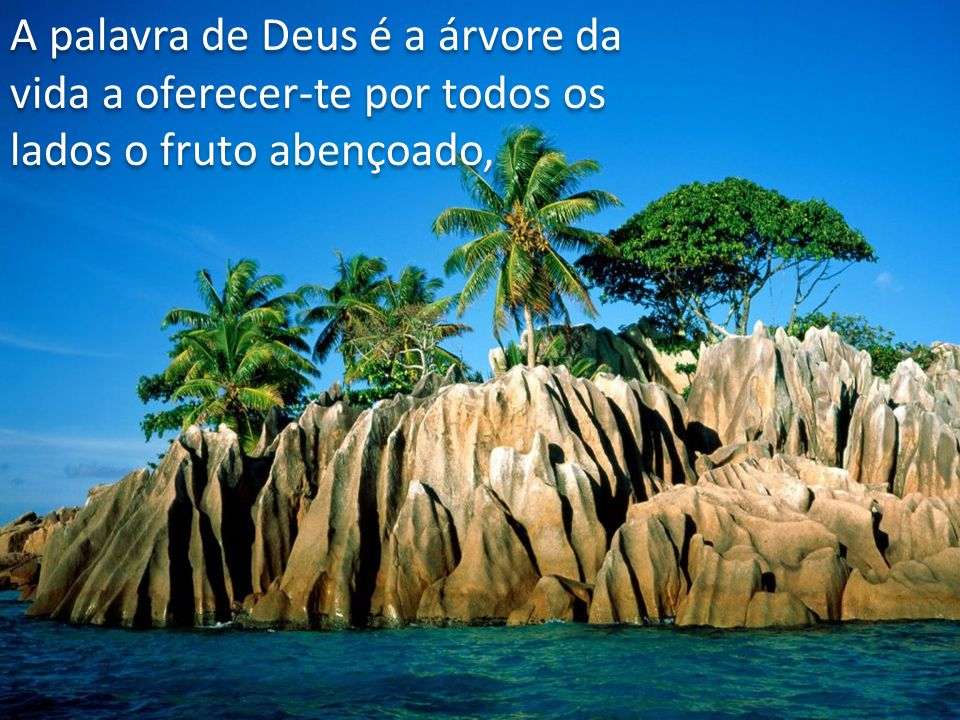 A palavra de Deus é a árvore da vida a oferecer-te por todos os lados o fruto abençoado,