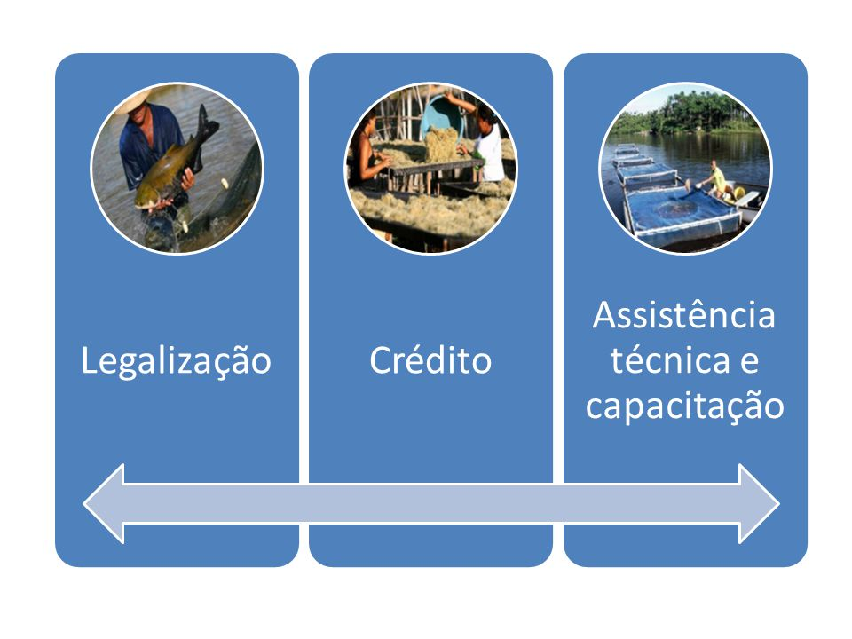 Assistência técnica e capacitação