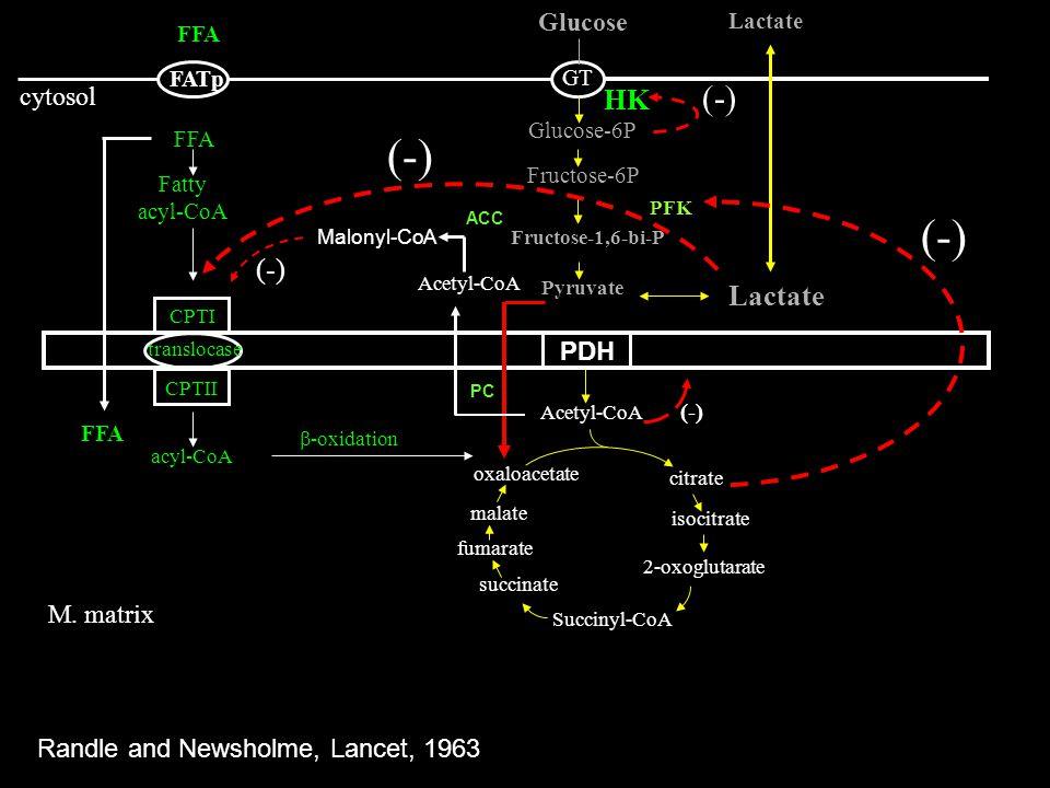 (-) (-) (-) HK (-) Lactate Glucose cytosol PDH M. matrix