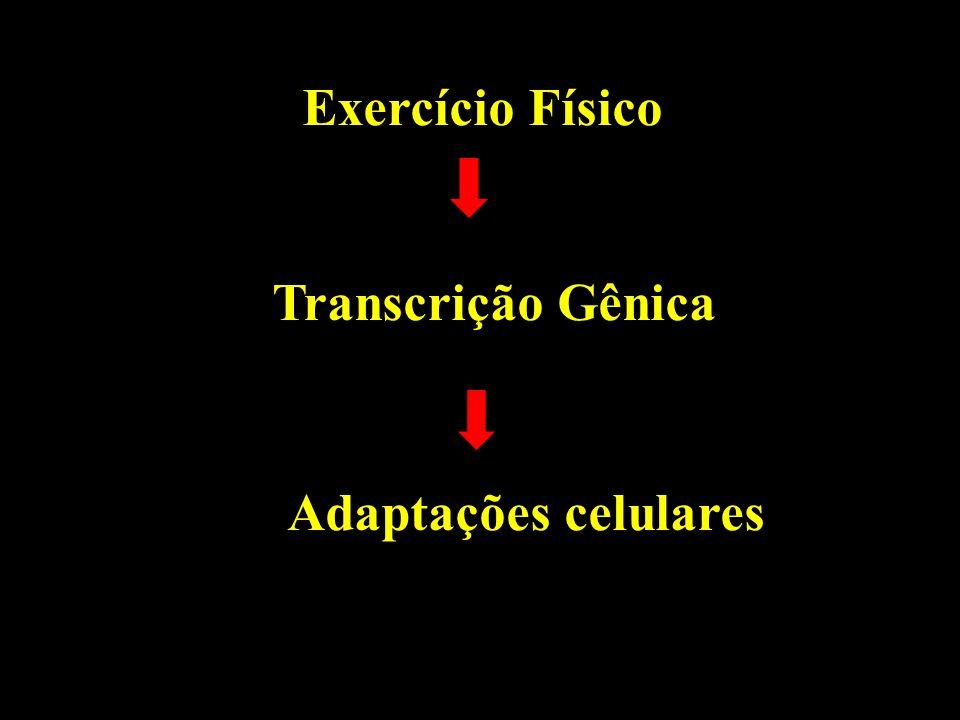 Exercício Físico Transcrição Gênica Adaptações celulares