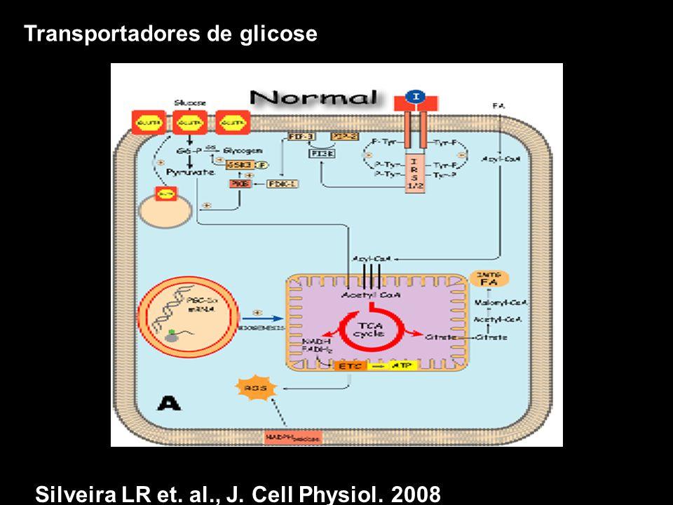 Transportadores de glicose