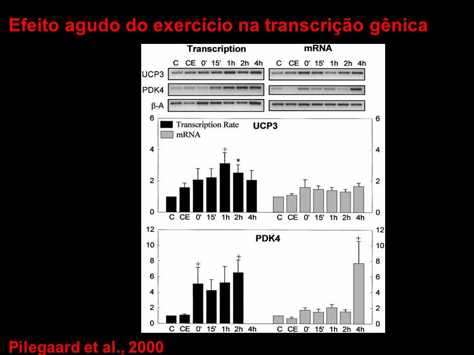 Efeito agudo do exercício na transcrição gênica