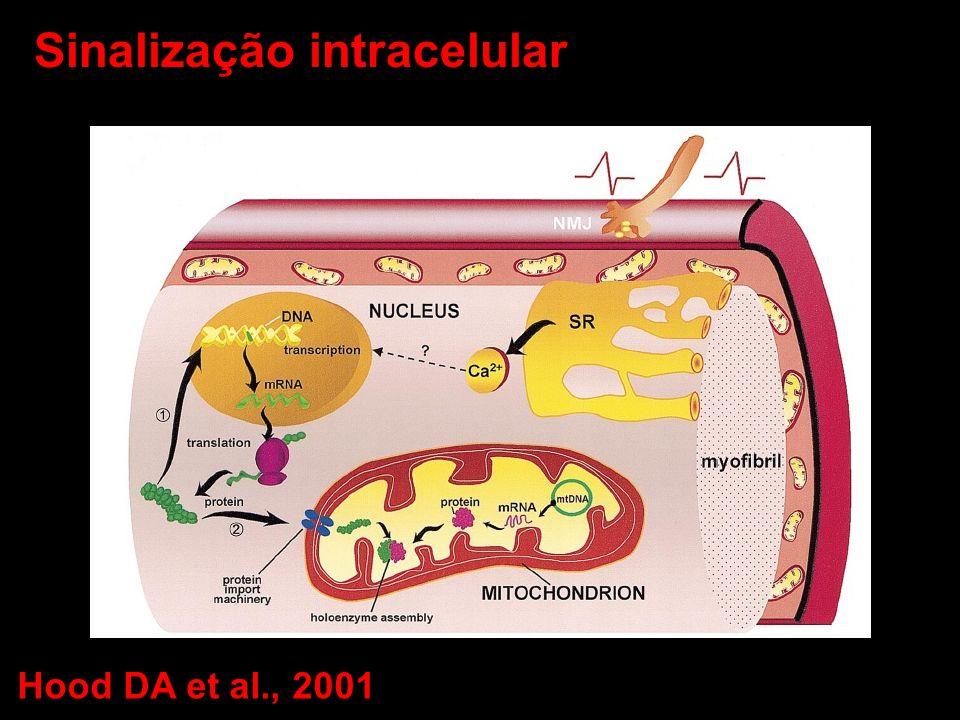 Sinalização intracelular