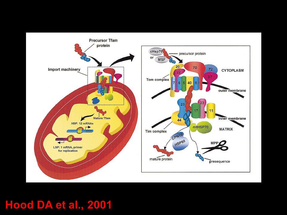 Hood DA et al., 2001