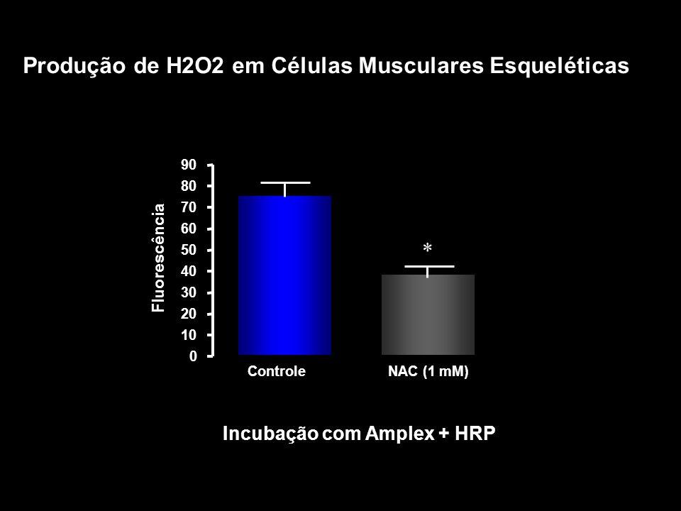 *** Produção de H2O2 em Células Musculares Esqueléticas *