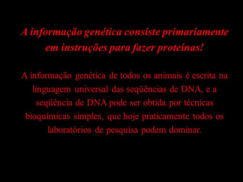 A informação genética consiste primariamente em instruções para fazer proteínas!