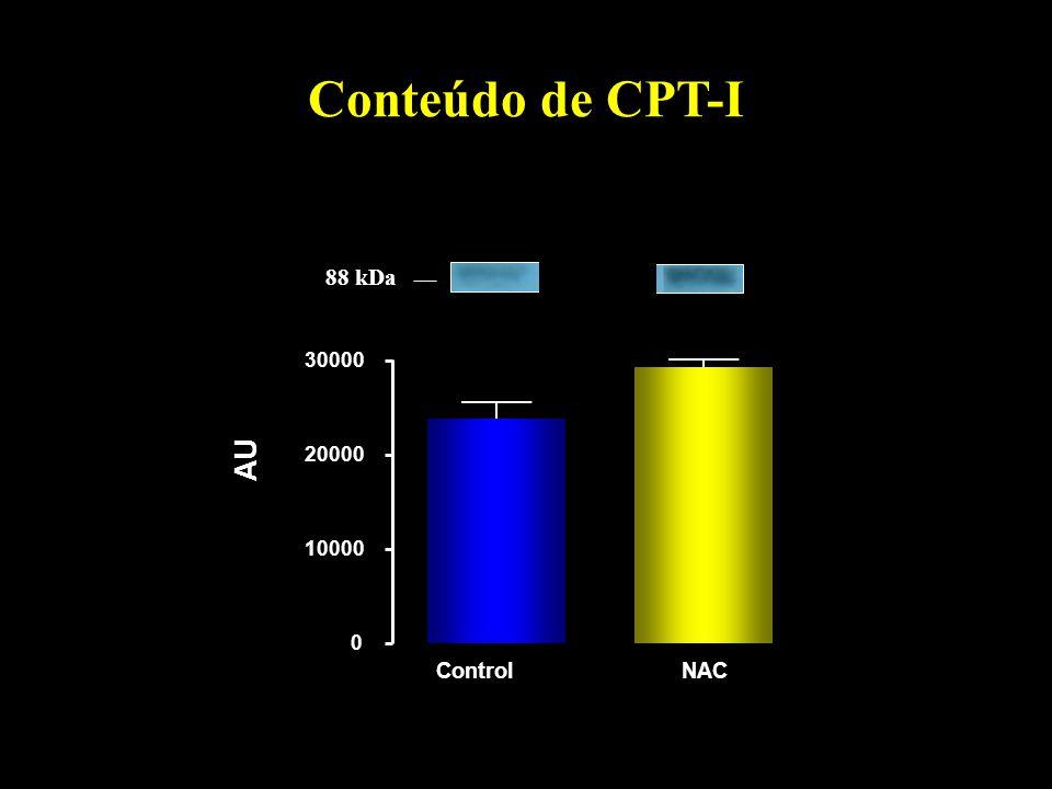 Conteúdo de CPT-I 10000 20000 30000 AU Control NAC 88 kDa