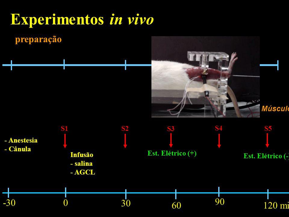 Experimentos in vivo preparação -30 30 90 60 120 min Músculo S1 S2 S3