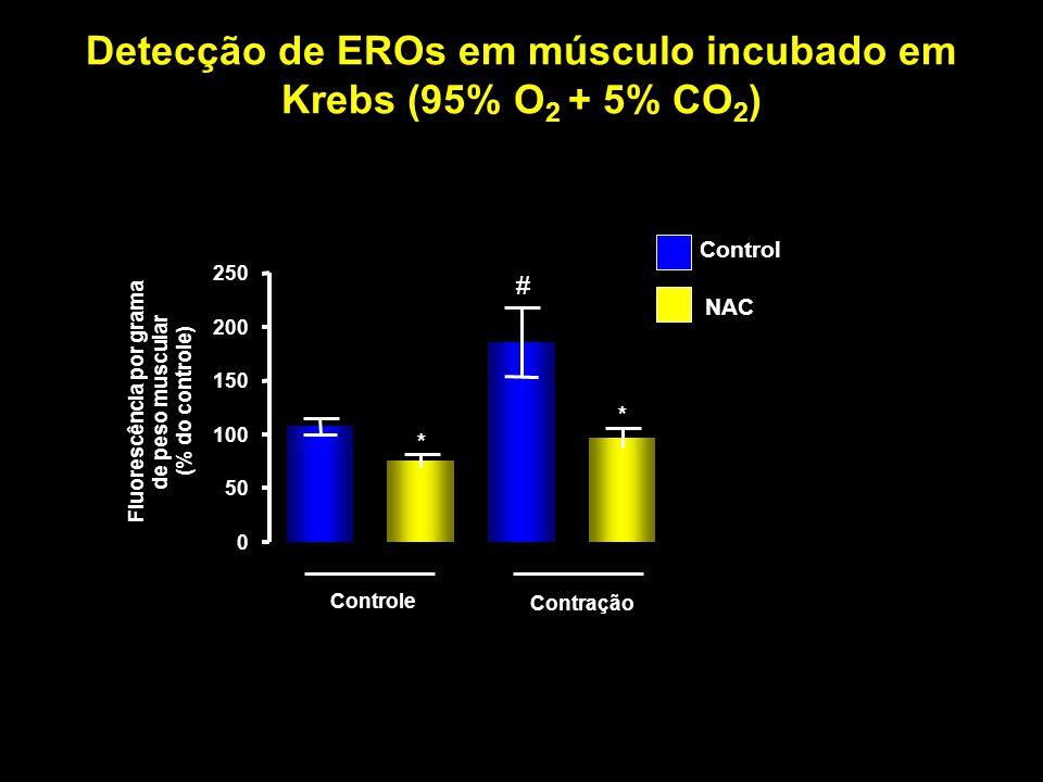 Detecção de EROs em músculo incubado em Krebs (95% O2 + 5% CO2)