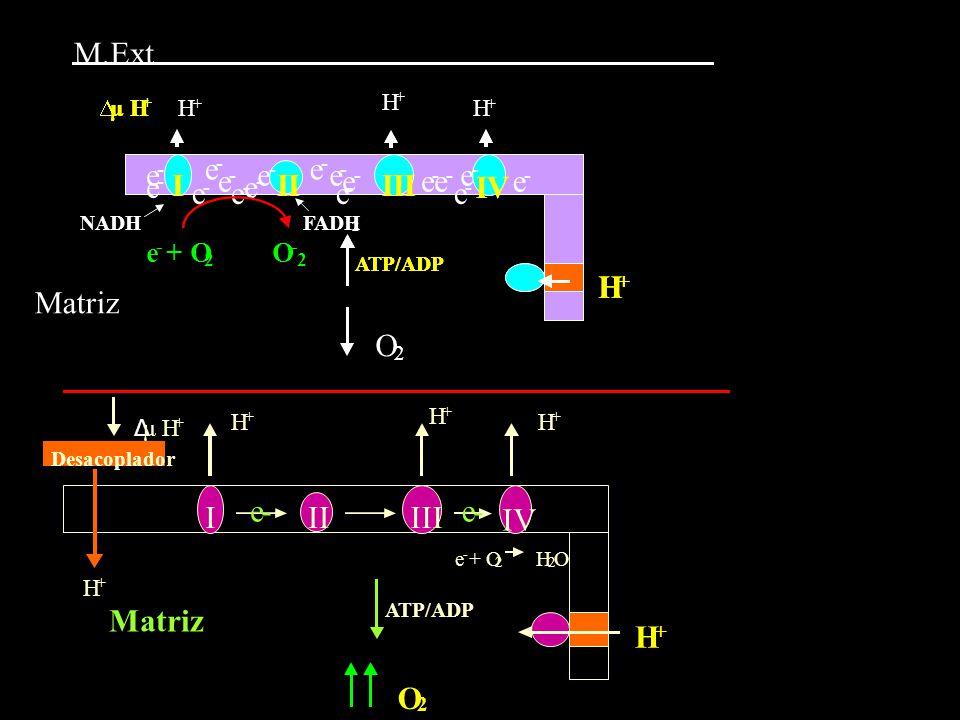 I II III IV H e Matriz M. Ext I II III IV H e - Matriz + O O  μ H Δ