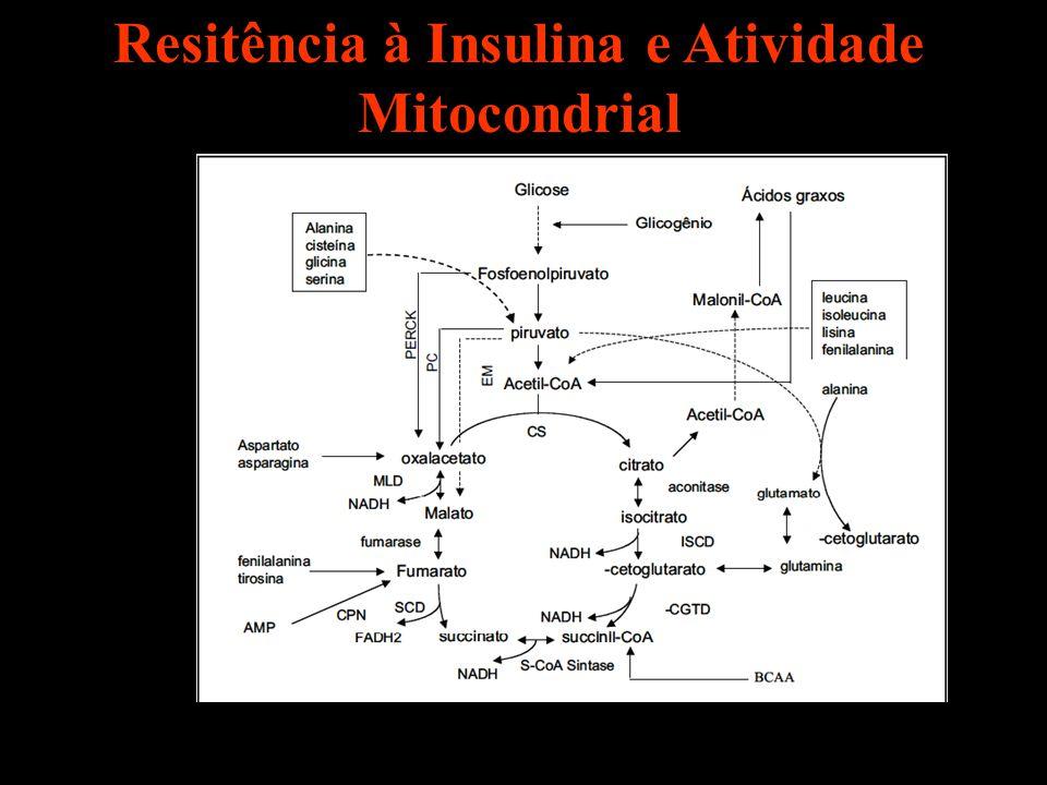 Resitência à Insulina e Atividade Mitocondrial