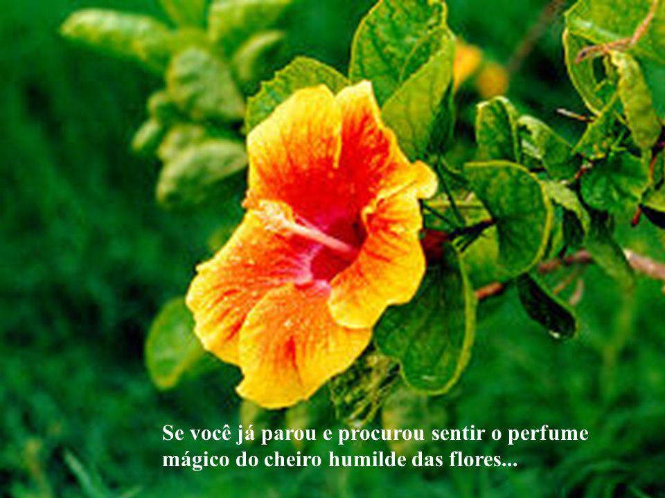 Se você já parou e procurou sentir o perfume mágico do cheiro humilde das flores...