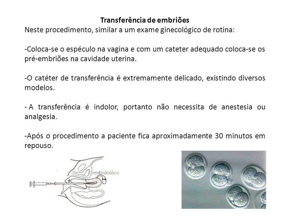 Transferência de embriões