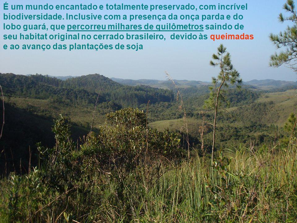 É um mundo encantado e totalmente preservado, com incrível biodiversidade.