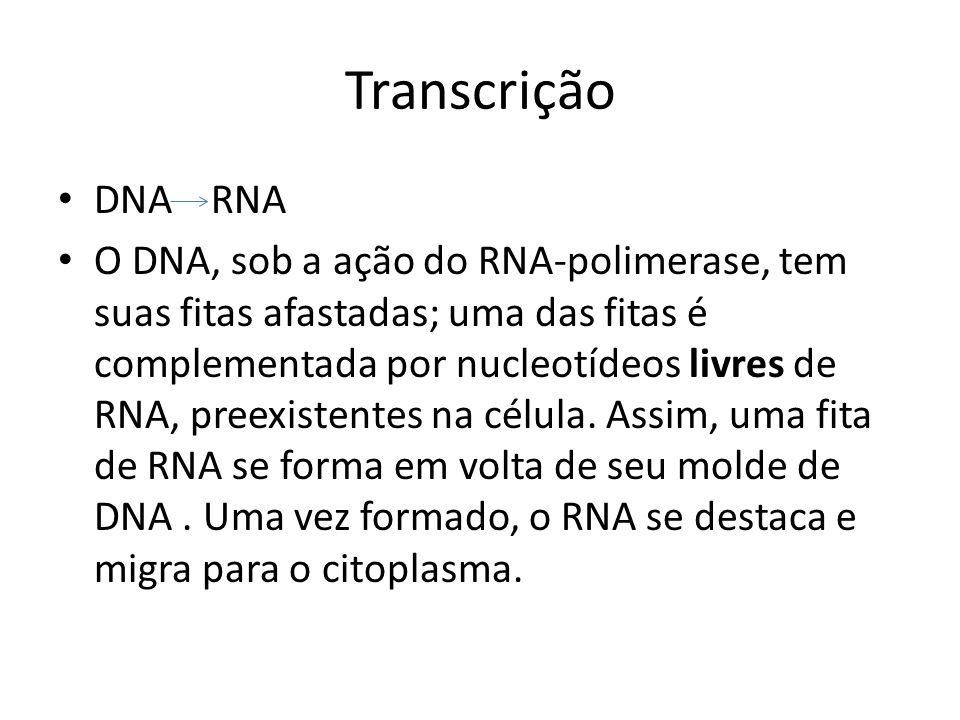 Transcrição DNA RNA.