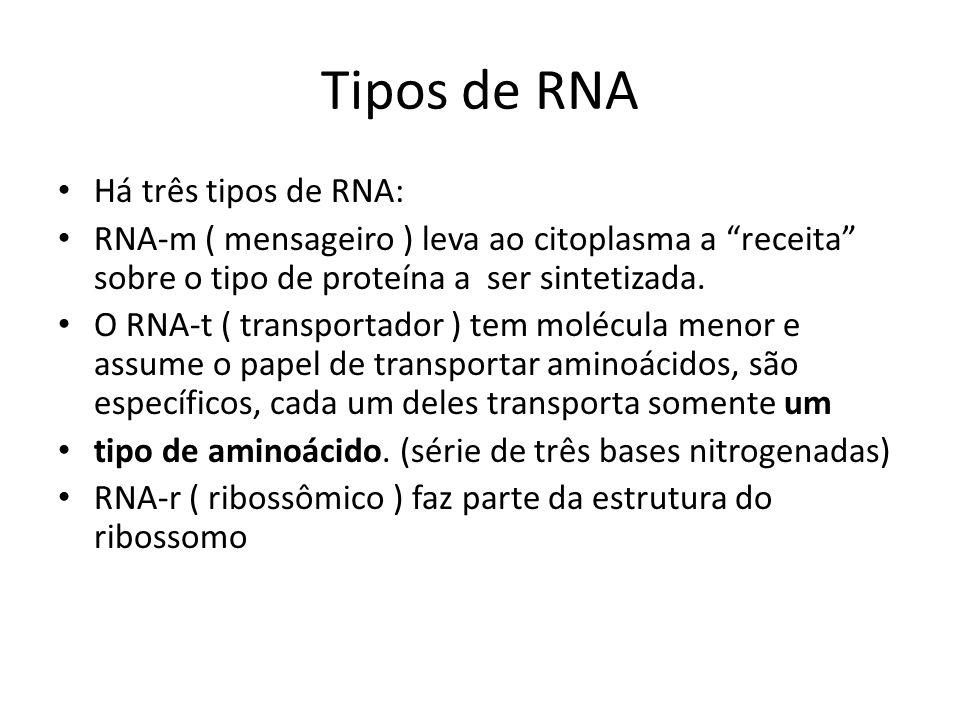 Tipos de RNA Há três tipos de RNA: