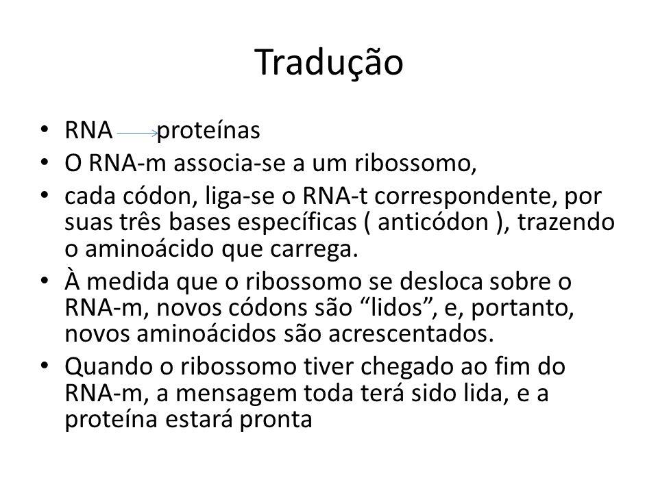 Tradução RNA proteínas O RNA-m associa-se a um ribossomo,