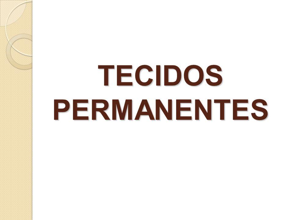 TECIDOS PERMANENTES