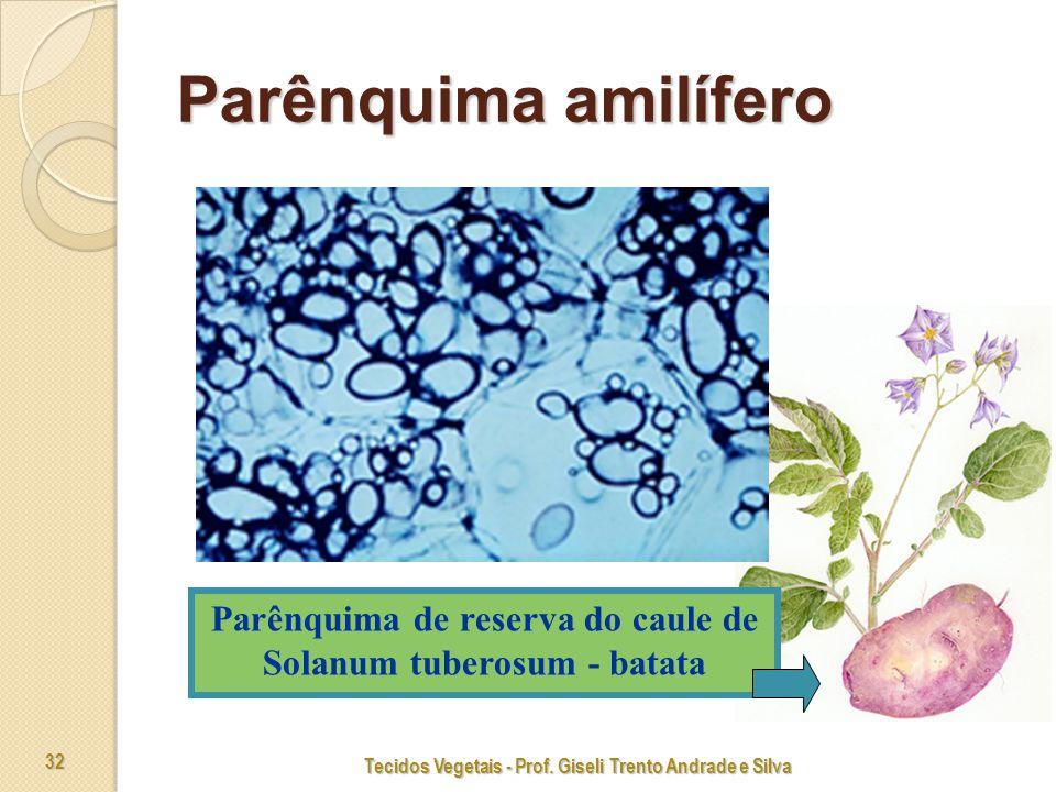 Parênquima amilífero Parênquima de reserva do caule de