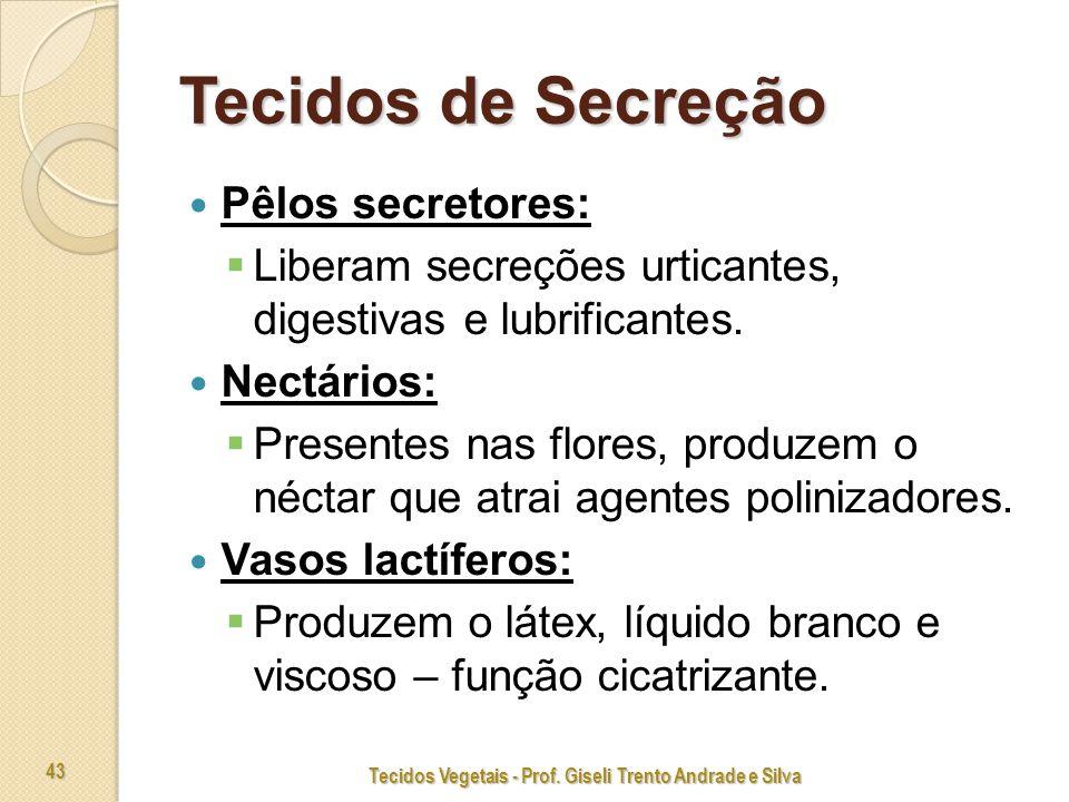 Tecidos Vegetais - Prof. Giseli Trento Andrade e Silva