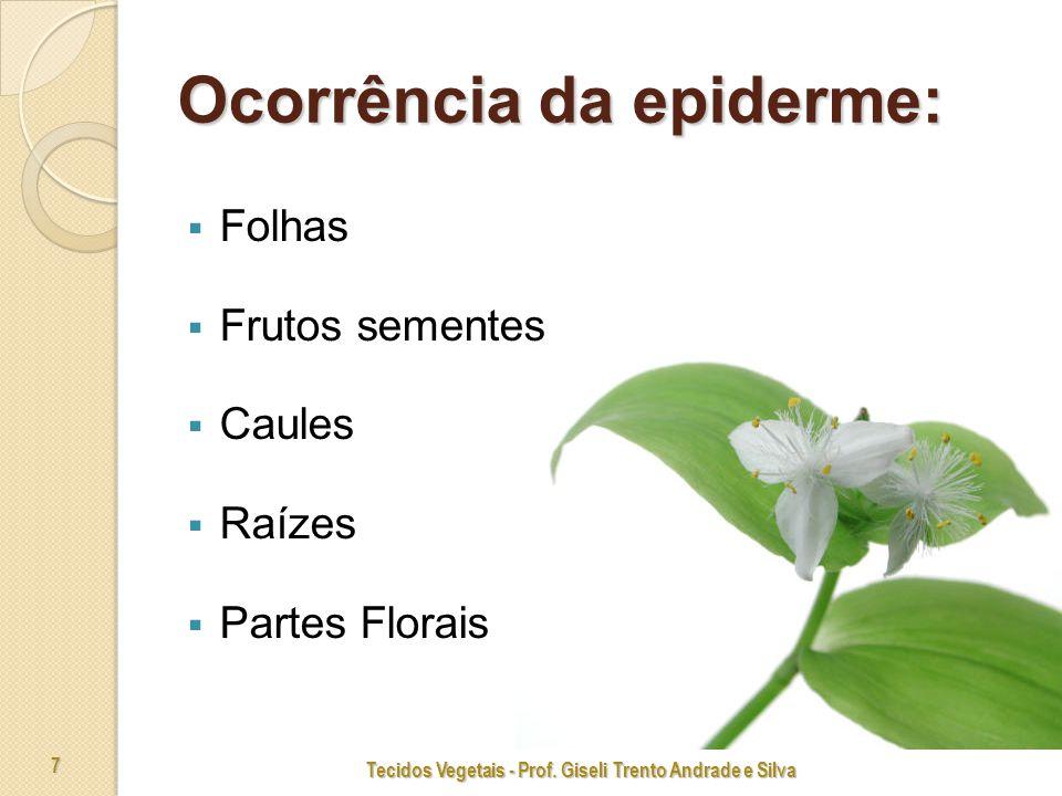 Ocorrência da epiderme: