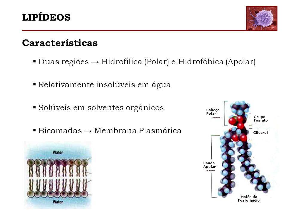 LIPÍDEOS Características