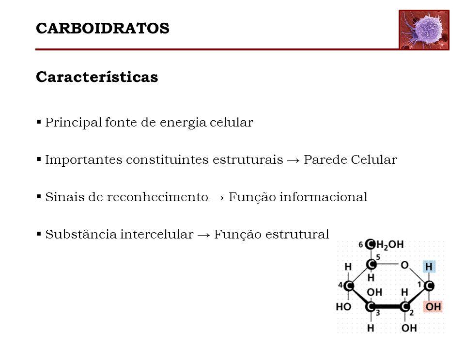 CARBOIDRATOS Características Principal fonte de energia celular