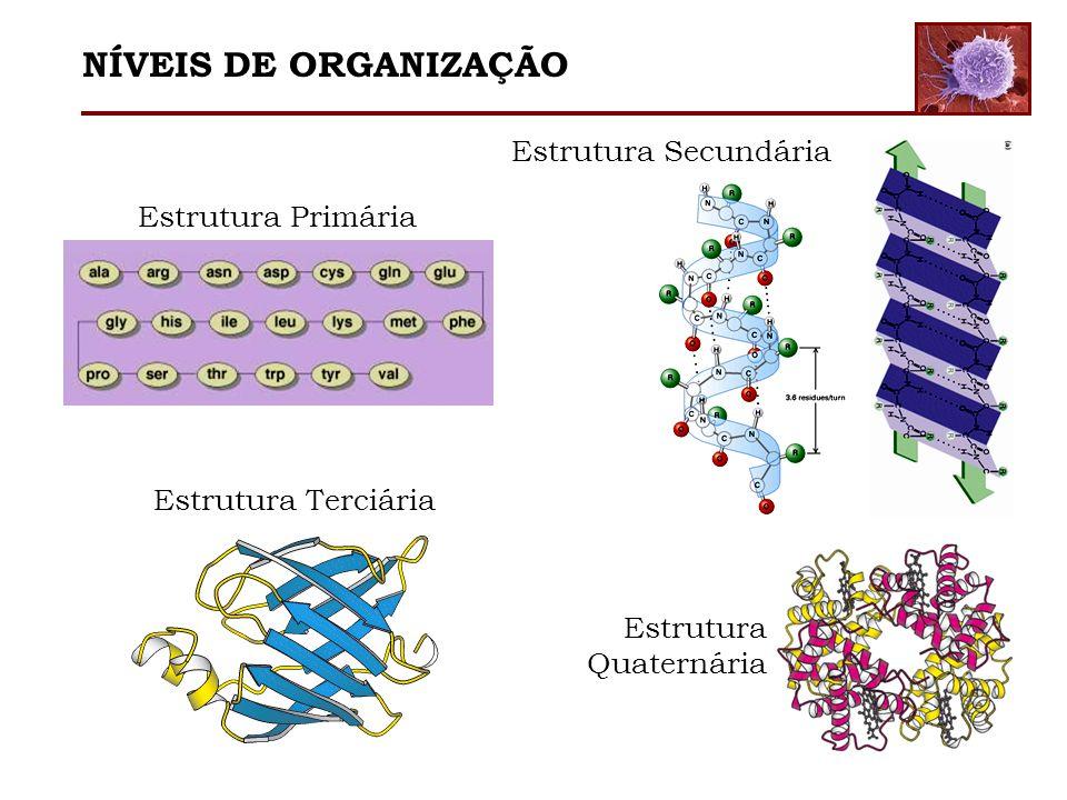 NÍVEIS DE ORGANIZAÇÃO Estrutura Secundária Estrutura Primária