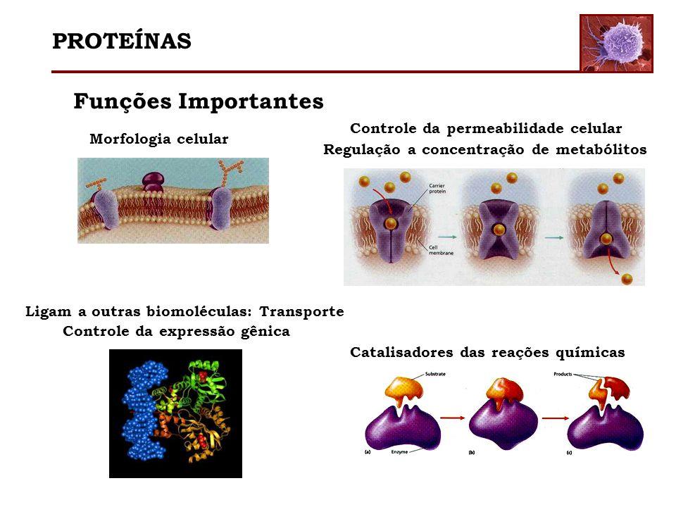 PROTEÍNAS Funções Importantes Controle da permeabilidade celular