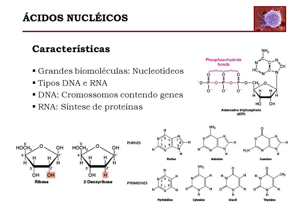 ÁCIDOS NUCLÉICOS Características Grandes biomoléculas: Nucleotídeos