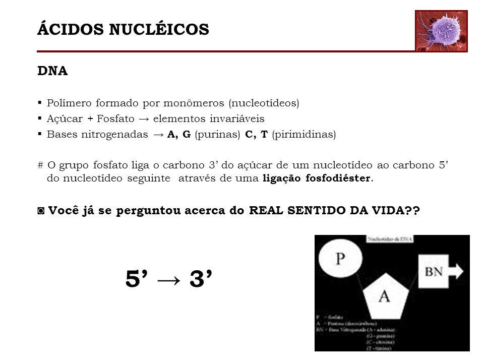 ÁCIDOS NUCLÉICOS 5' → 3' DNA