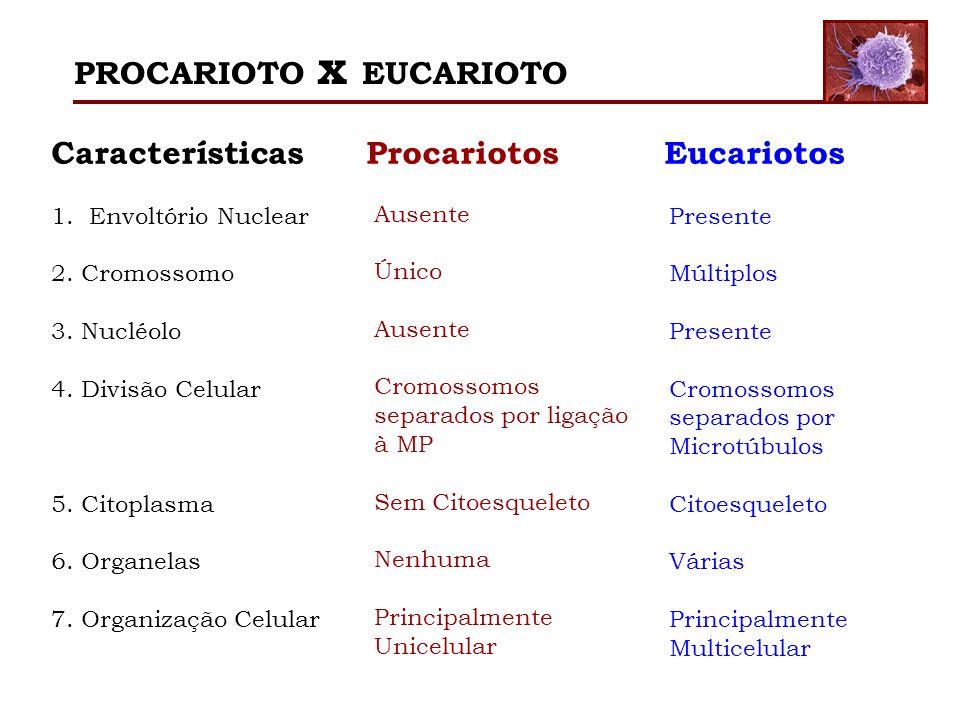 PROCARIOTO x EUCARIOTO