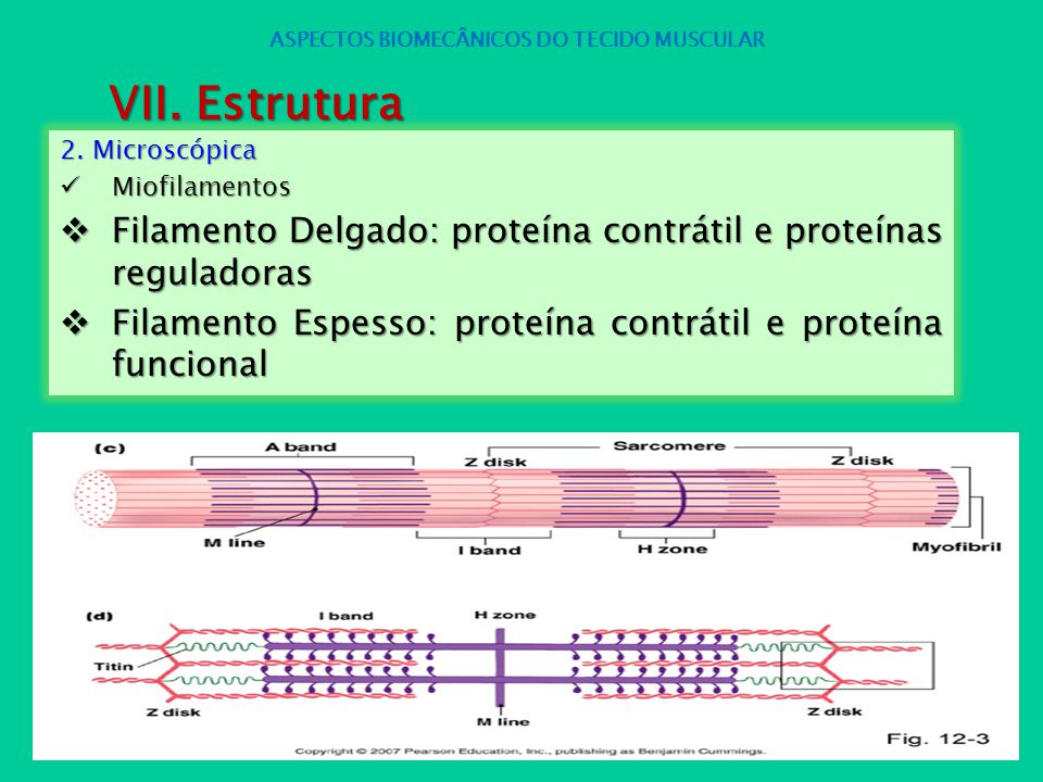 ASPECTOS BIOMECÂNICOS DO TECIDO MUSCULAR