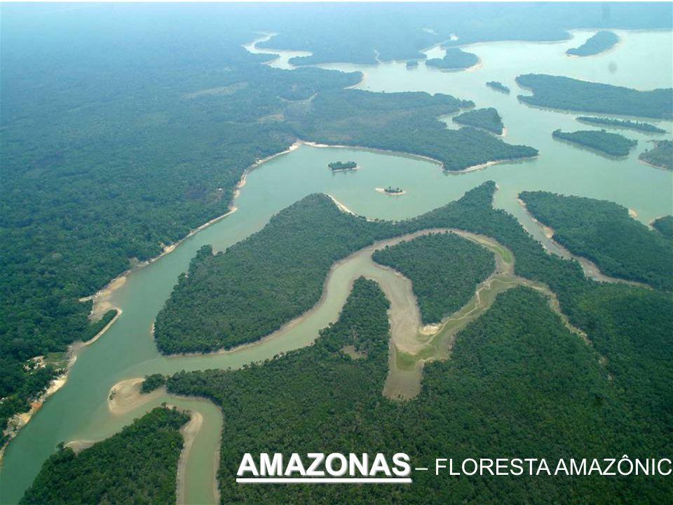 AMAZONAS – FLORESTA AMAZÔNICA