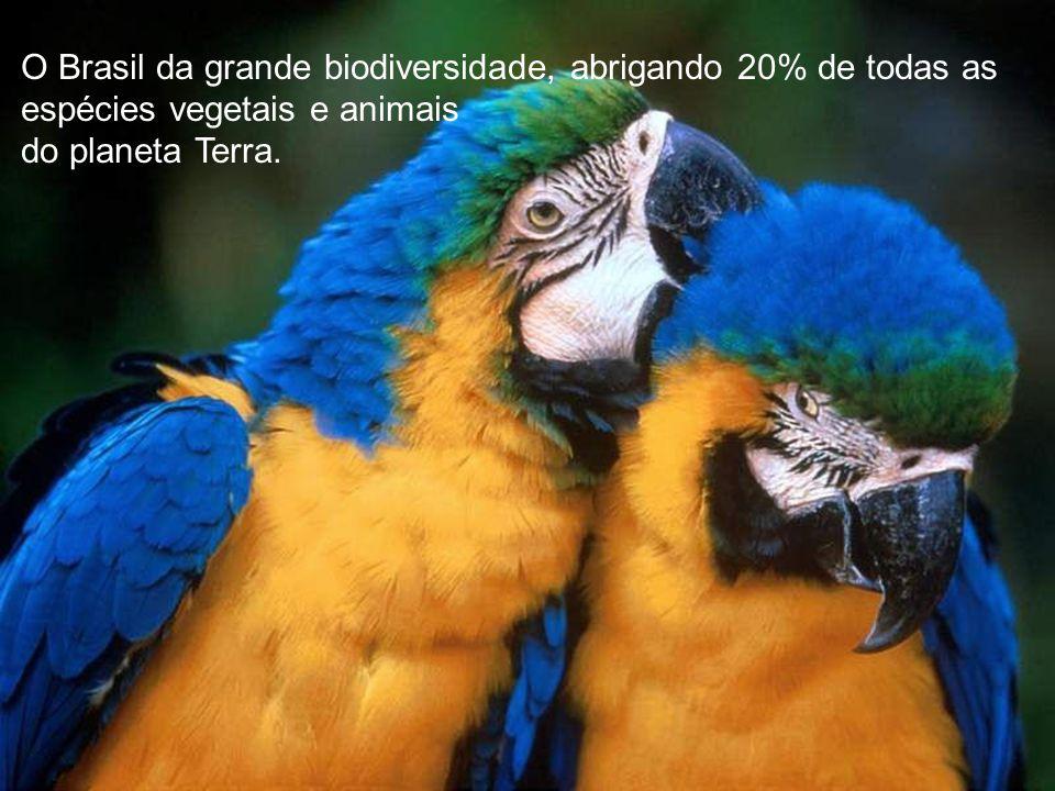 O Brasil da grande biodiversidade, abrigando 20% de todas as