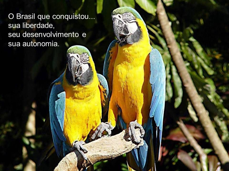 O Brasil que conquistou...