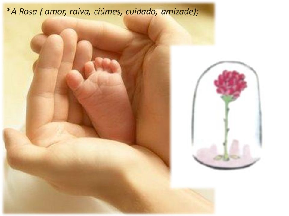 *A Rosa ( amor, raiva, ciúmes, cuidado, amizade);