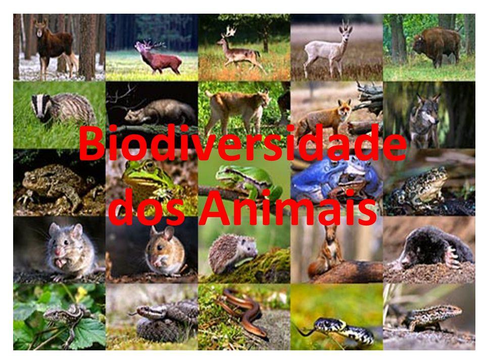 Biodiversidade dos Animais