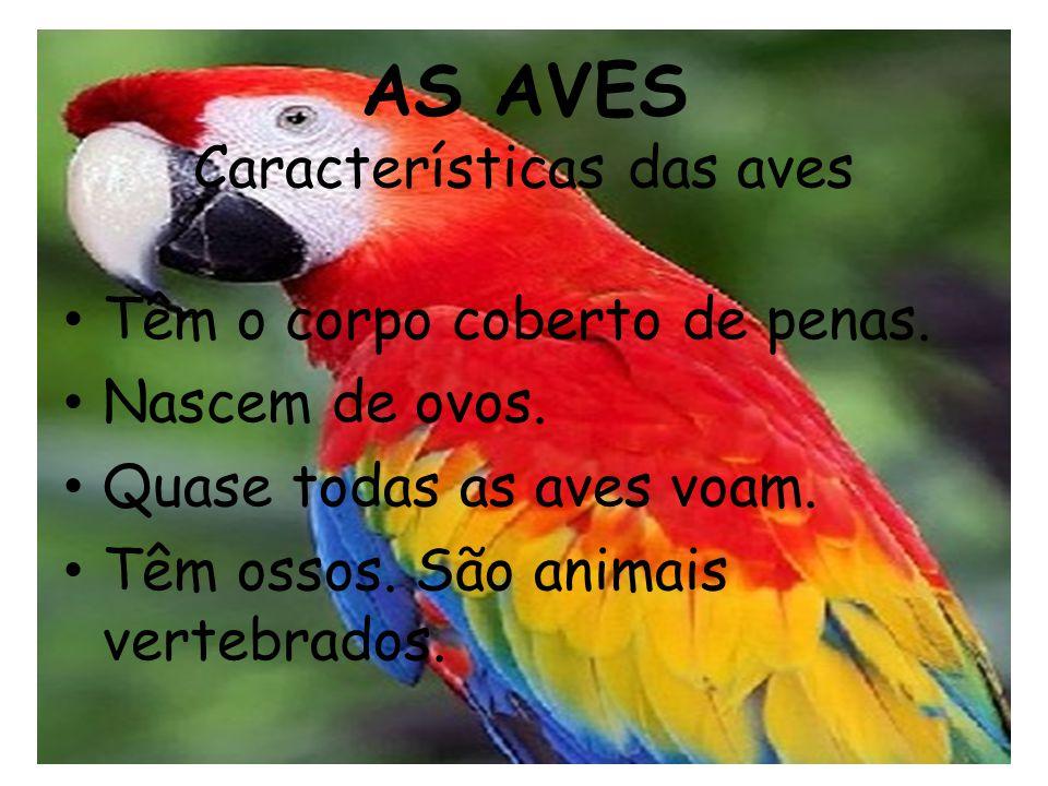 AS AVES Características das aves