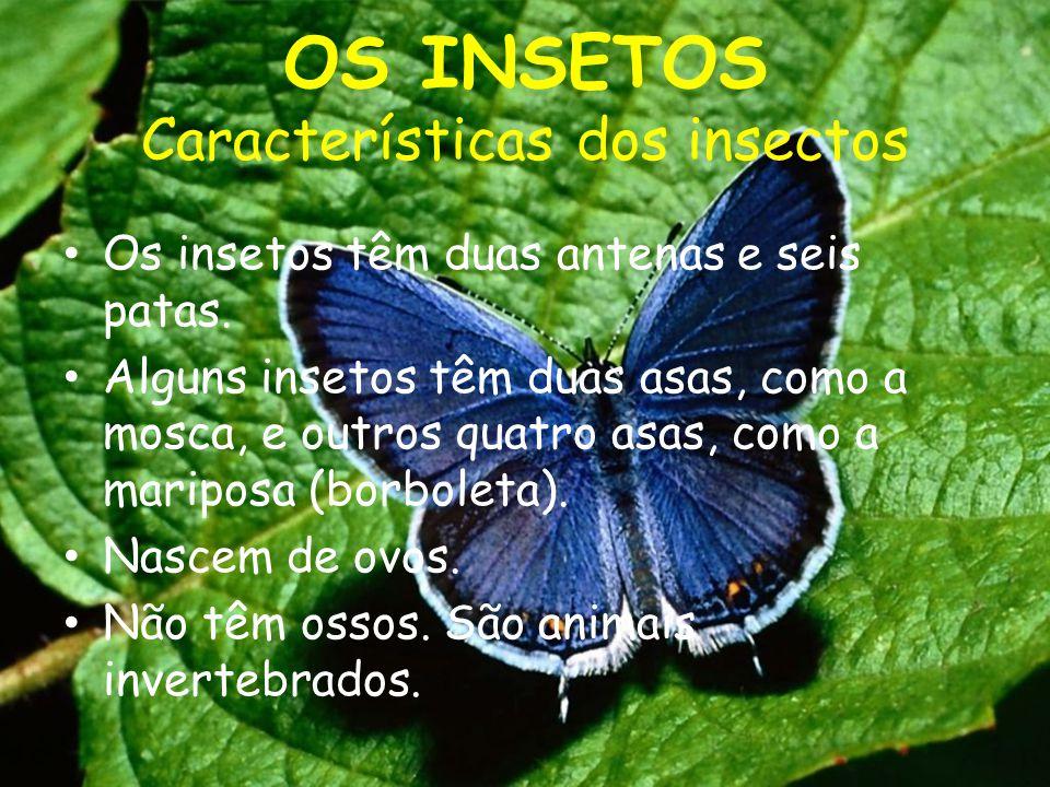 OS INSETOS Características dos insectos