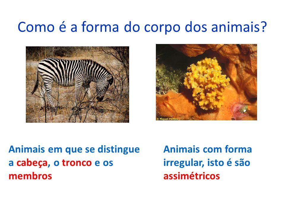 Como é a forma do corpo dos animais