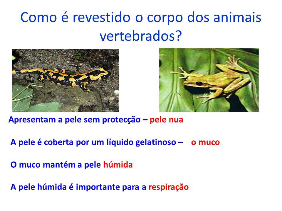 Como é revestido o corpo dos animais vertebrados