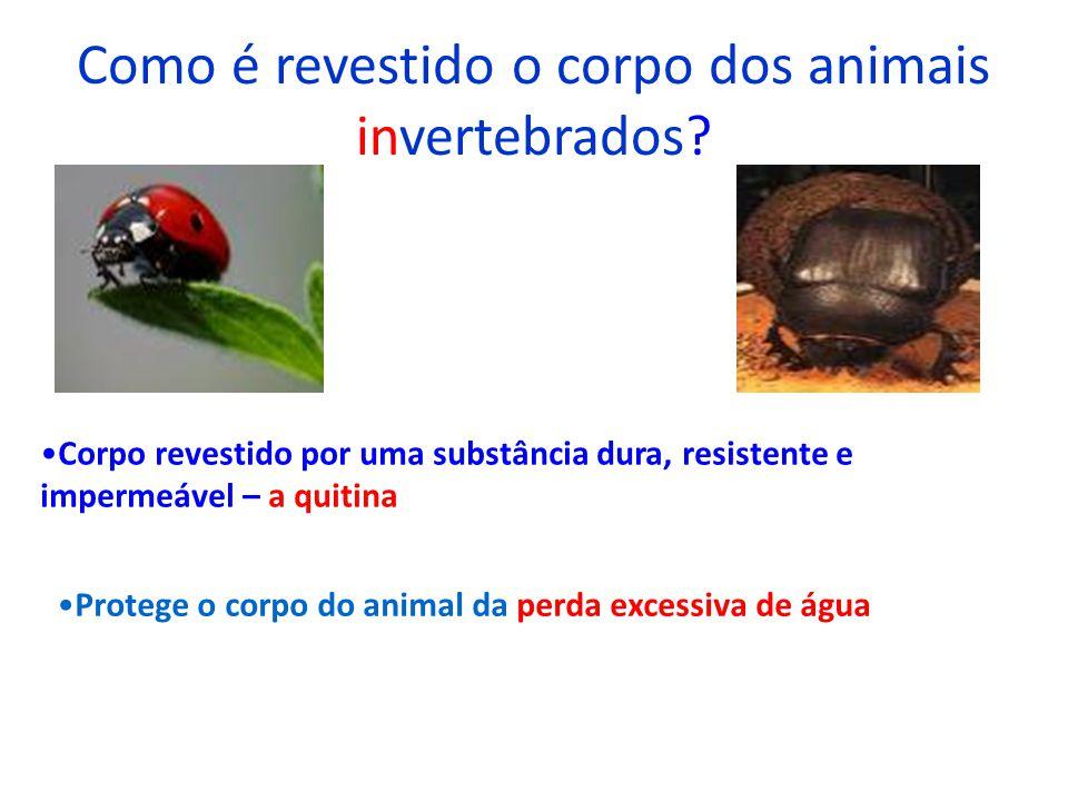 Como é revestido o corpo dos animais invertebrados
