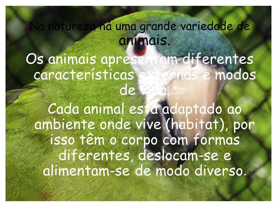 Na natureza há uma grande variedade de animais.