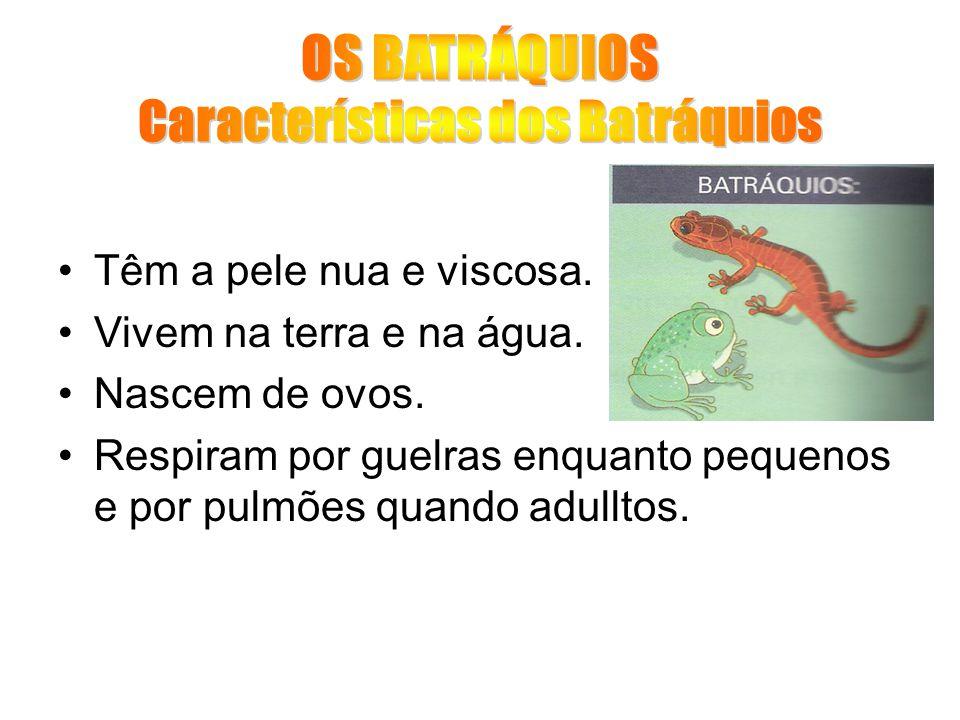 OS BATRÁQUIOS Características dos Batráquios