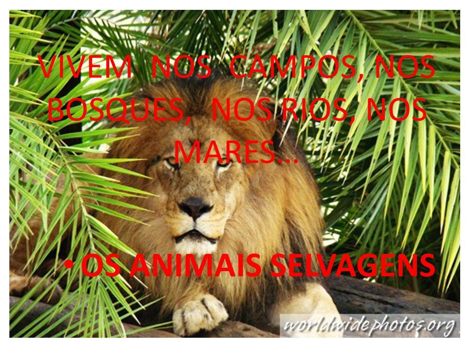 VIVEM NOS CAMPOS, NOS BOSQUES, NOS RIOS, NOS MARES…