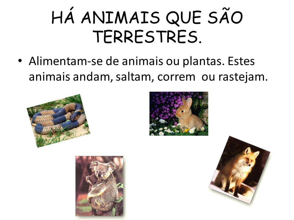 HÁ ANIMAIS QUE SÃO TERRESTRES.