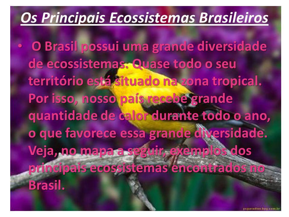 Os Principais Ecossistemas Brasileiros
