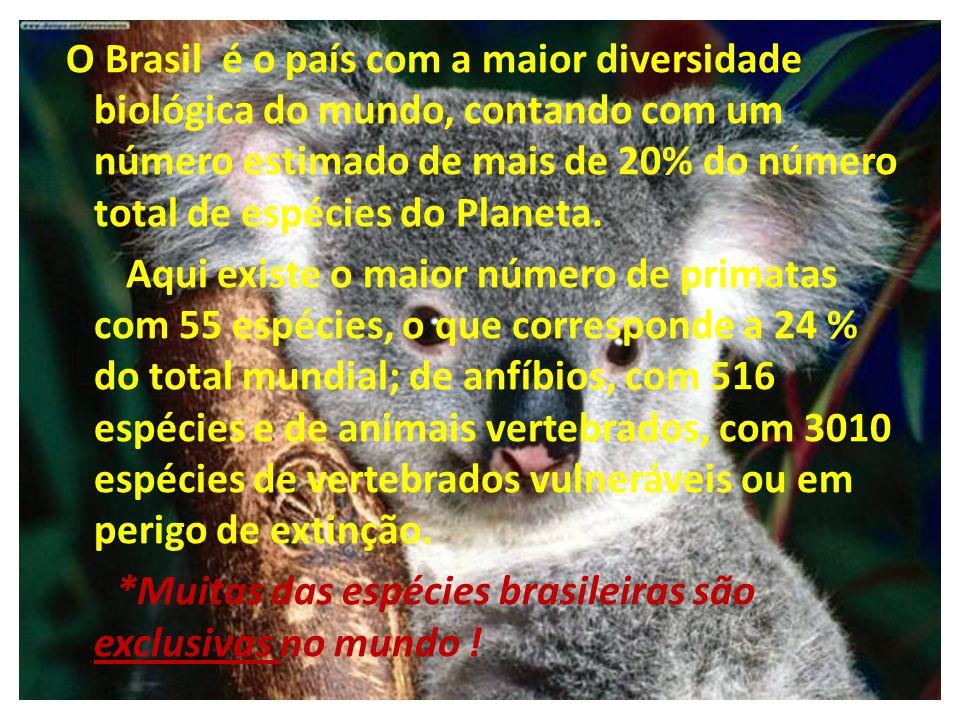 *Muitas das espécies brasileiras são exclusivas no mundo !